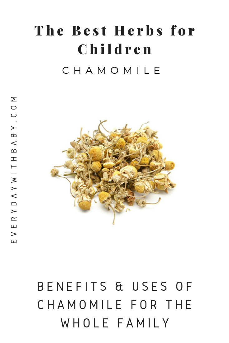 The Best Herbs for Children: Chamomile